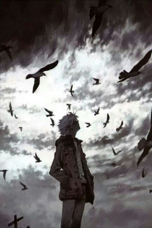 boy birds